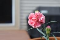 Mom's Flowers - 5.10.15